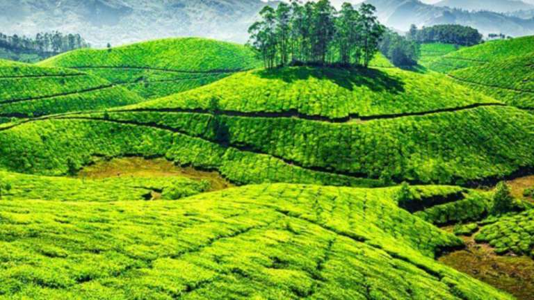 Coorg Travel Package From Nashik